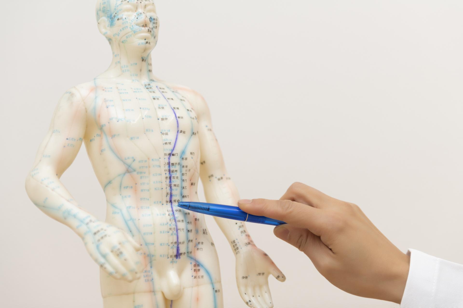 Dr-Di-Chen-Koenig-TCM-Akupunktur-Mensch
